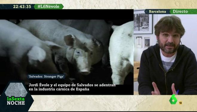 Lecciones para el sector ganadero del programa de Salvados sobre el sector porcino