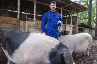 Fraga do Coto, de monte cheo de broza a paraíso para porcos celtas