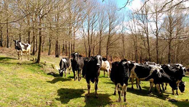 Sat Torneiros, unha gandería ecolóxica que recupera terras do abandono