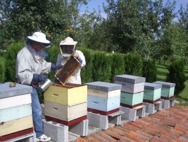 Prevese unha menor colleita de mel en Galicia