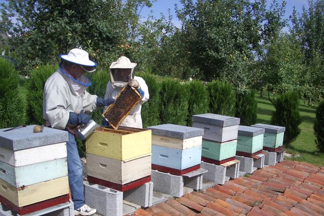AGA organiza un curso básico de apicultura