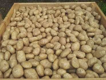 Claves para almacenar correctamente las patacas