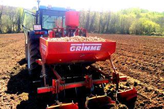 Os agricultores da Limia apuran a sementeira da pataca