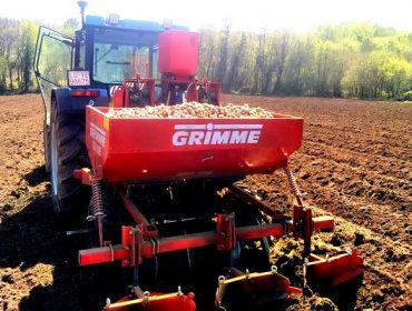 Los agricultores de A Limia apuran la siembra de la patata
