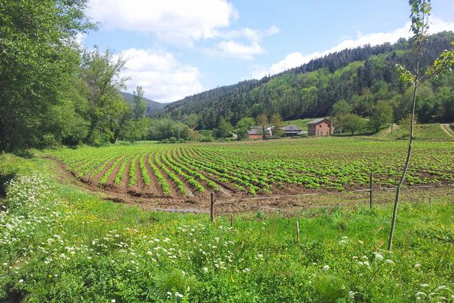 El Gobierno creará en Lugo el Laboratorio Nacional de Sanidad Vegetal