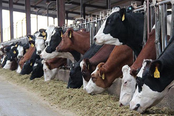 Vantaxes do sistema de cruces de Procross para vacún de leite