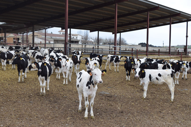 Ferramentas xenómicas para mellorar a saúde en granxas leiteiras