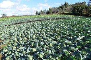 Xornada sobre permacultura e metodoloxía de liña clave en agricultura ecolóxica