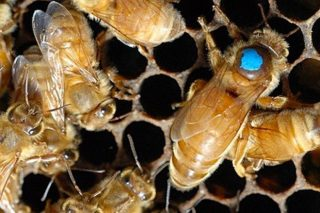Curso de división de colmenas y cría de reinas