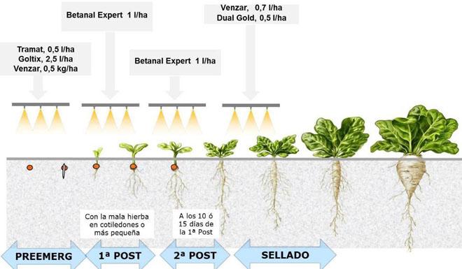 Plan de tratamentos de herbicidas recomendados, con doses e produtos indicados.