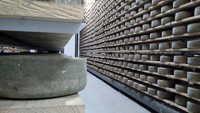 Galmesano, un queixo 'top' singular en Galicia
