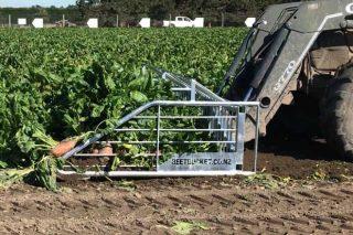 Cultivo de la remolacha para alimentación animal en Galicia y la Cornisa Cantábrica