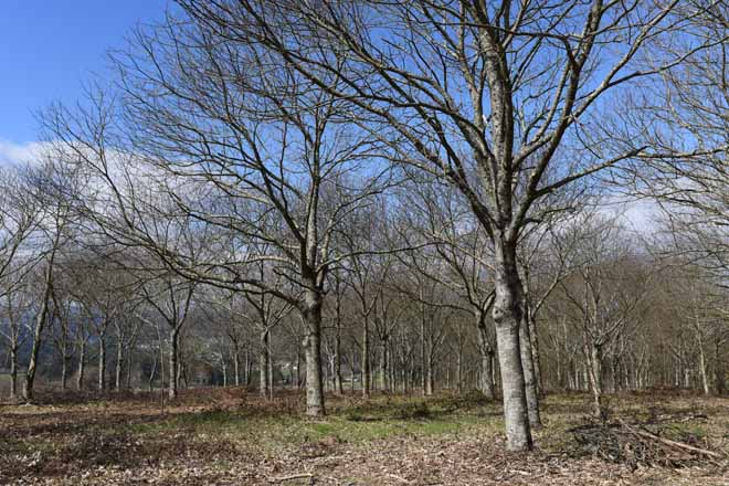 Jornada 'Monte y Salud' sobre los beneficios que generan los bosques para el bienestar
