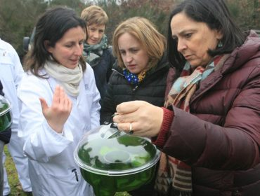 Vespa Velutina: A Xunta distribuirá material de trampeo primaveral entre 3.048 apicultores