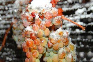 """Xornadas da Evega sobre """"Uso do frío na elaboración de viño. Innovacións e tendencias"""""""
