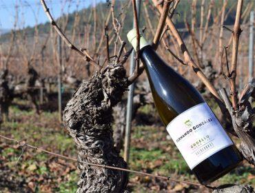 Fernando González: o viño do aviador que soñou con facer o mellor branco de Valdeorras