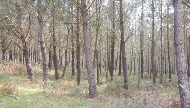 Chequeo a las Sofor, ¿solución para la gestión del minifundio forestal?