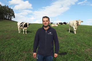 Gandería Callobro Holstein, camiñando cara un rabaño de vacas A2 A2