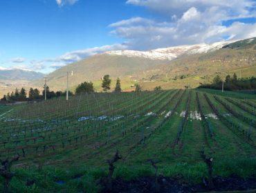 Adegas Carballal prevé plantar 10 hectáreas máis de viñedo ante a alta demanda do Godello de Valdeorras