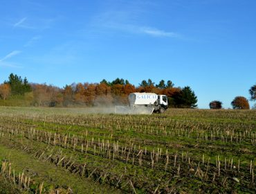Consellos de Galical para lograr unha boa colleita de millo: a importancia do encalado