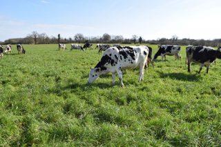 """""""Na faixa atlántica europea pódese producir leite coa menor pegada de carbono do mundo"""""""