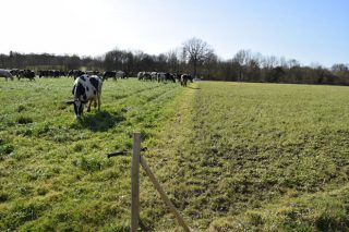 Pastoreo celular: Una técnica para aprovechar al máximo el pasto