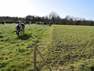 Pastoreo celular: Unha técnica para aproveitar ao máximo o pasto