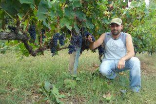 Negueira de Muñiz celebra o día 21 o rexurdir do cultivo do viñedo nas ribeiras do Navia