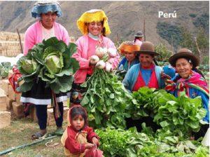Cultivo bioinensivo en Syafalla, en Perú, a 4.500 metros de altitude.