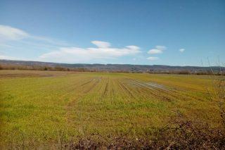 Dan por perdida a colleita de cereal de inverno na Limia debido ás intensas choivas