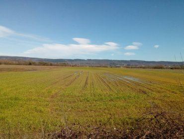 A sementeira de cereal en Galicia cae á metade debido ás choivas