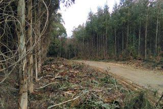 Lumes e parcelarias centran as queixas do agro no Valedor do Pobo