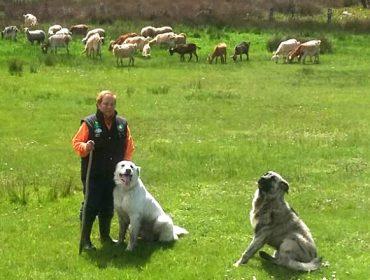 """""""A Administración castiga o pastoreo, cando somos nós quen mantemos o territorio"""""""