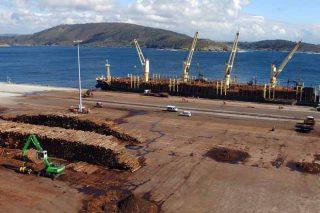 Un segundo barco de piñeiro consolida a ruta de exportación a Asia