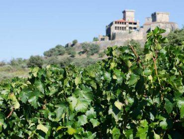 Terras do Cigarrón, explorando la potencialidad de la uva godello