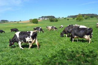 Galega 100%: a marca que garante o mellor leite de Galicia