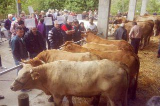 Prezos medios de 2.150 euros na poxa de xovencas de Acruga en Seoane do Courel