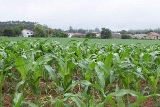 ¿En que concellos galegos está subindo máis o prezo da terra agrícola e forestal?
