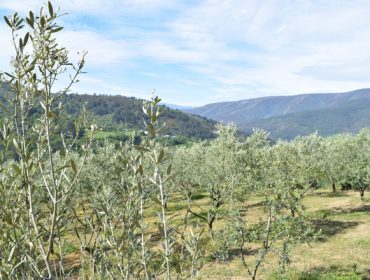 Curso sobre a poda en verde da oliveira