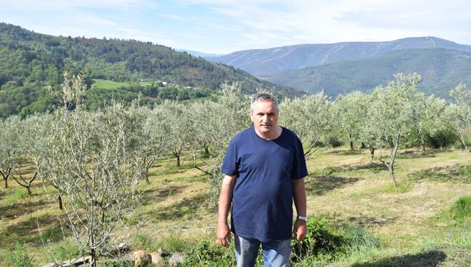 Manuel Mondelo: El primer productor de aceite de oliva 100% gallego