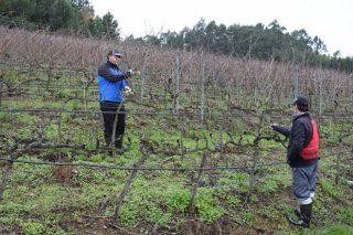 Bruselas alerta de que cada vez quedan menos viticultores a pesar de las buenas perspectivas para el sector