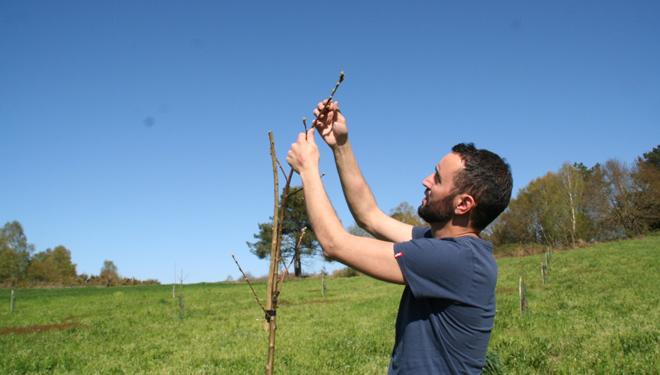 Fernando cuenta con una plantación de castaños.
