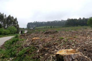 Trece concellos solicitaron achegas do plan de mantemento de faixas de biomasa da Deputación de Lugo