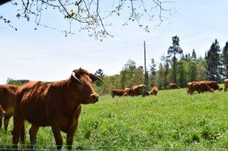 Programa de Bayer para subvencionar a los ganaderos de vacuno que innoven en bienestar animal