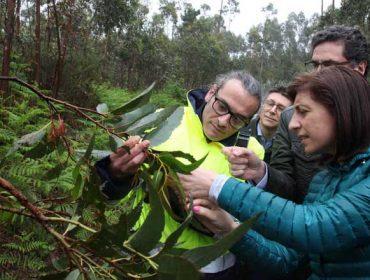 Planes de lucha biológica en 2018 contra las plagas del eucalipto y del castaño