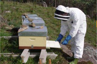 El Ministerio convoca ayudas para proyectos de investigación en el sector apícola