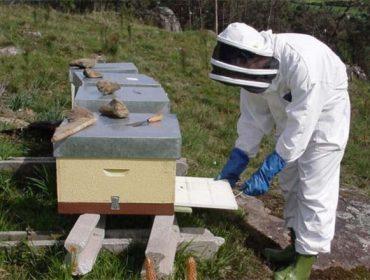 Formación en prevención de riscos na apicultura