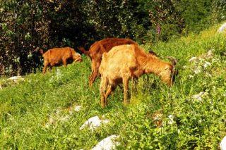 Obradoiro en Beariz sobre comunidades de montes vecinales