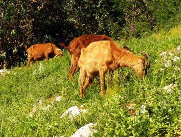 Obradoiro en Beariz sobre comunidades de montes veciñais