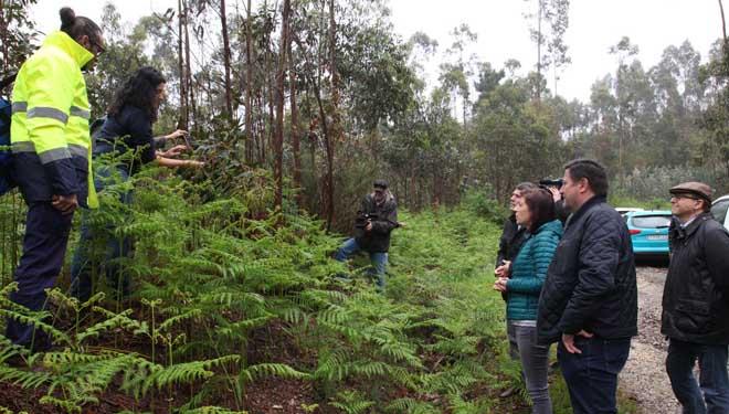 Plans de loita biolóxica no 2018 contra as pragas do eucalipto e do castiñeiro